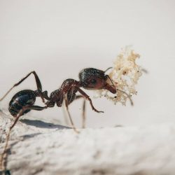 Do You Need to Hire an Ant Exterminator